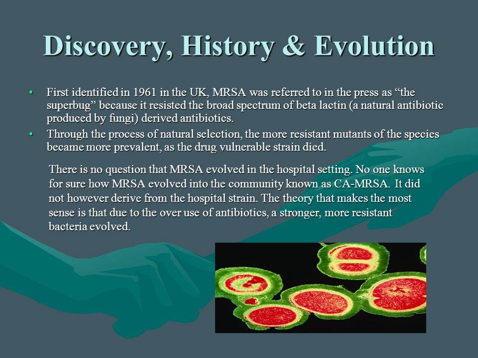 """Discovery, History & Evolution First identified in 1961 in the UK, MRSA was referred to in the press as """"the superbug"""" because it resisted the broad s"""