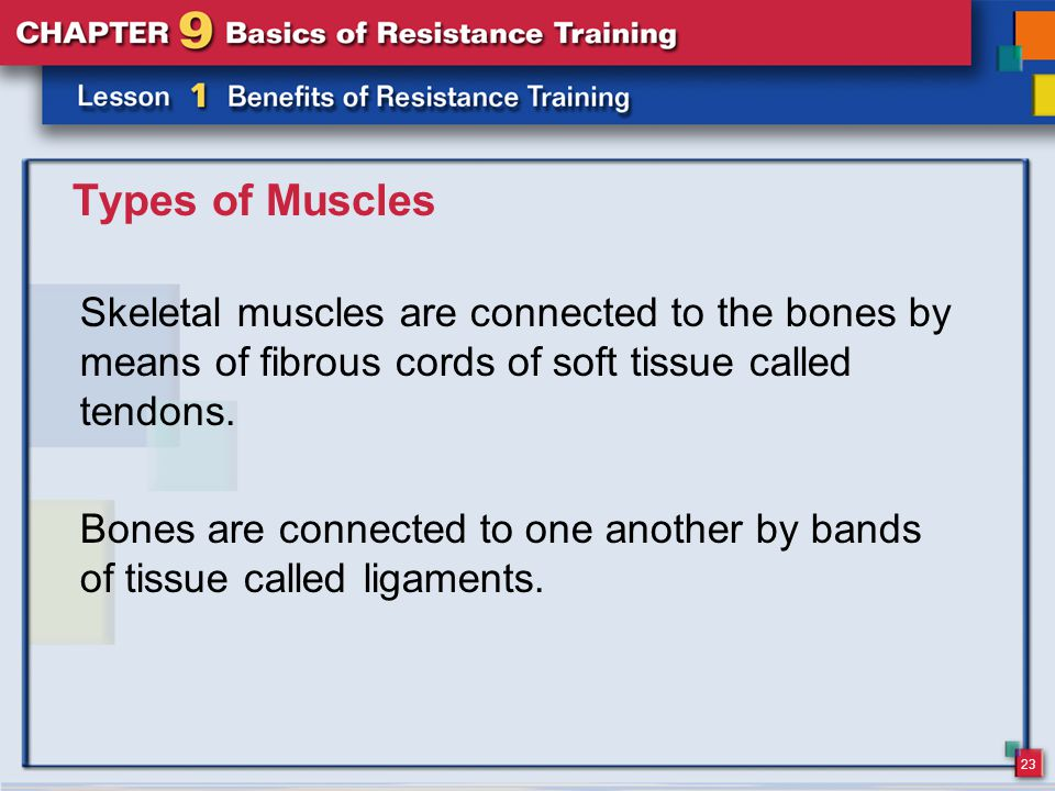 23 Types of Muscles Skeletal muscles are connected to the bones by means of fibrous cords of soft tissue called tendons.