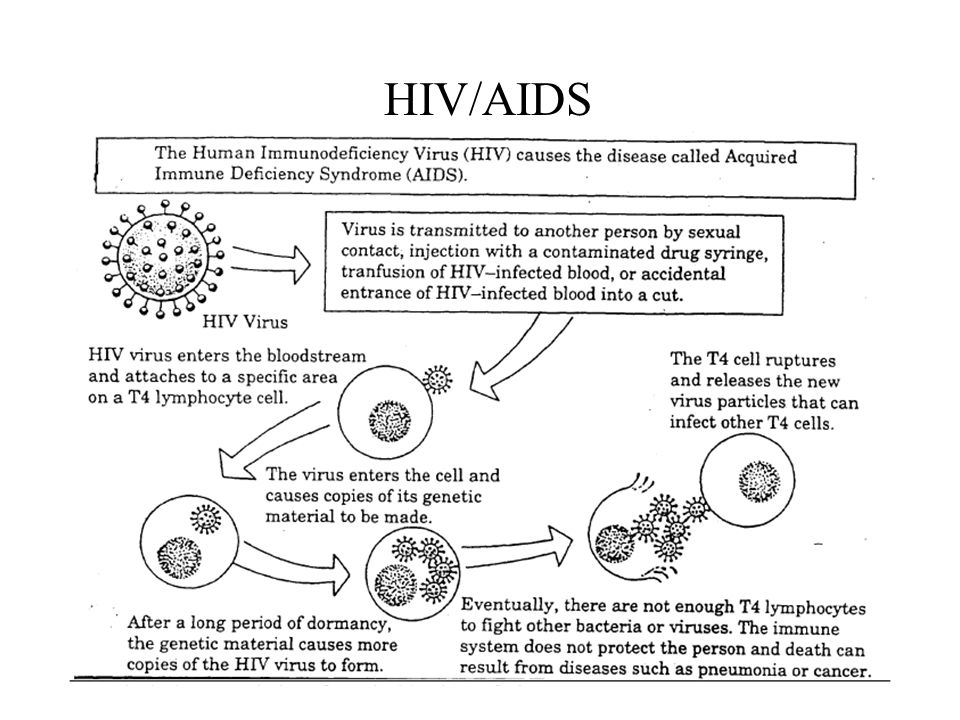 The viral DNA become active and starts making new viral proteins The infected cells burst…releasing the new viruses