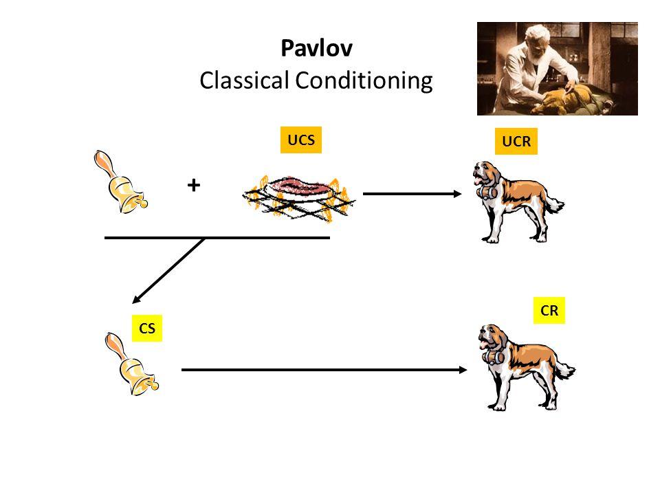 Pavlov Classical Conditioning UCS UCR CS CR +