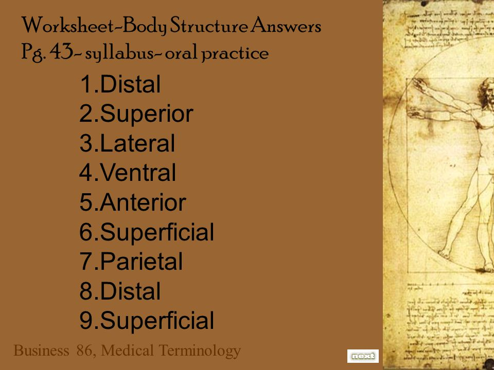 Business 86, Medical Terminology 1.brain - cranial 2.heart - thoracic 3.lungs - thoracic 4.intestine - abdominopelvic 5.stomach - abdominopelvic 6.spinal cord - spinal