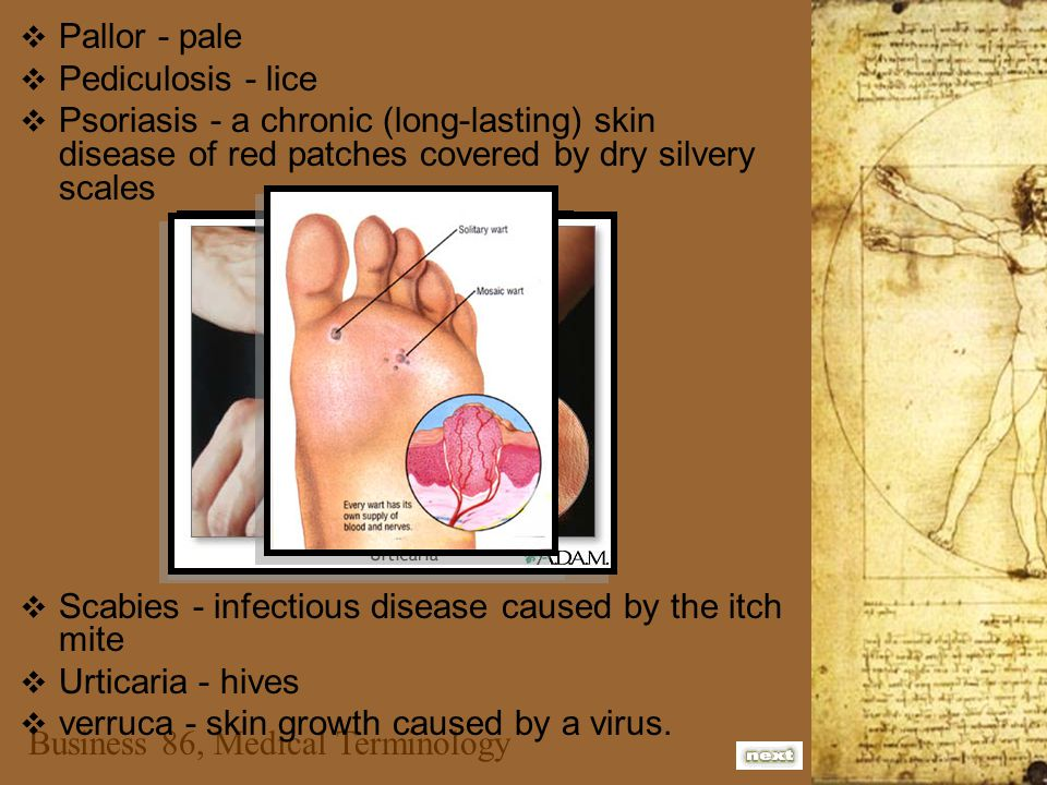 Business 86, Medical Terminology PPallor - pale PPediculosis - lice PPsoriasis - a chronic (long-lasting) skin disease of red patches covered by