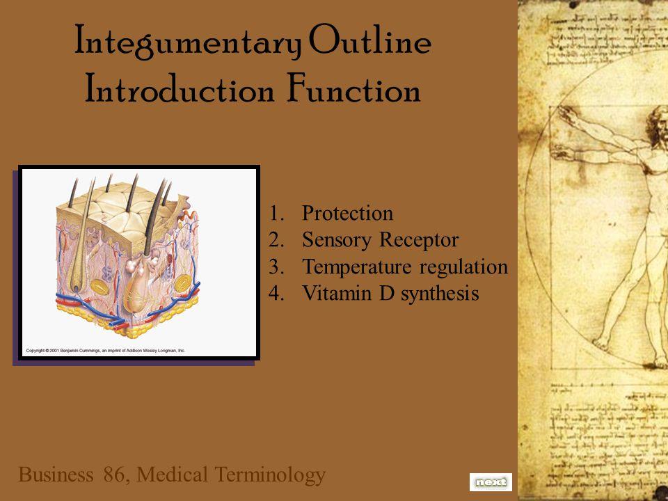 Business 86, Medical Terminology Anatomy of the Skin Derm, Dermat, Cutane Layers Epidermis - upon the skin Dermis - true skin Subcutaneous tissue- under the skin