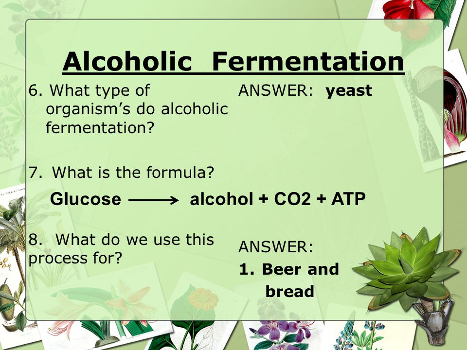 6.What type of organism's do alcoholic fermentation.