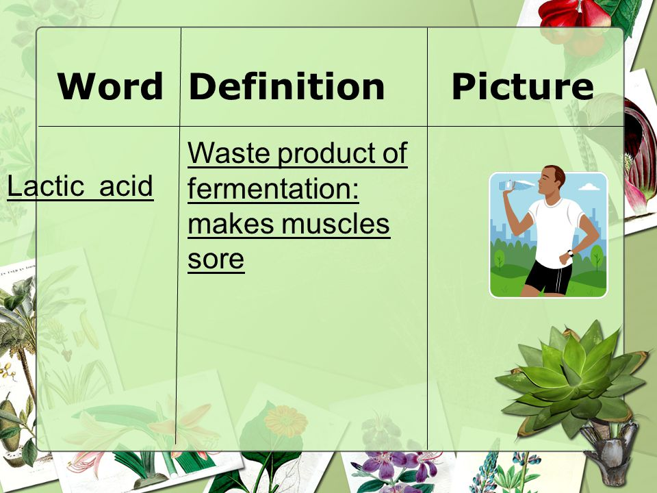 WordDefinitionPicture Lactic acid Waste product of fermentation: makes muscles sore