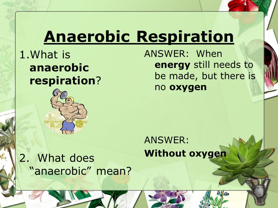 Anaerobic Respiration 1.What is anaerobic respiration.