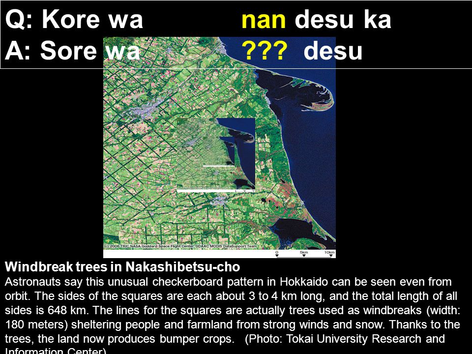 Windbreak trees in Nakashibetsu-cho Astronauts say this unusual checkerboard pattern in Hokkaido can be seen even from orbit.