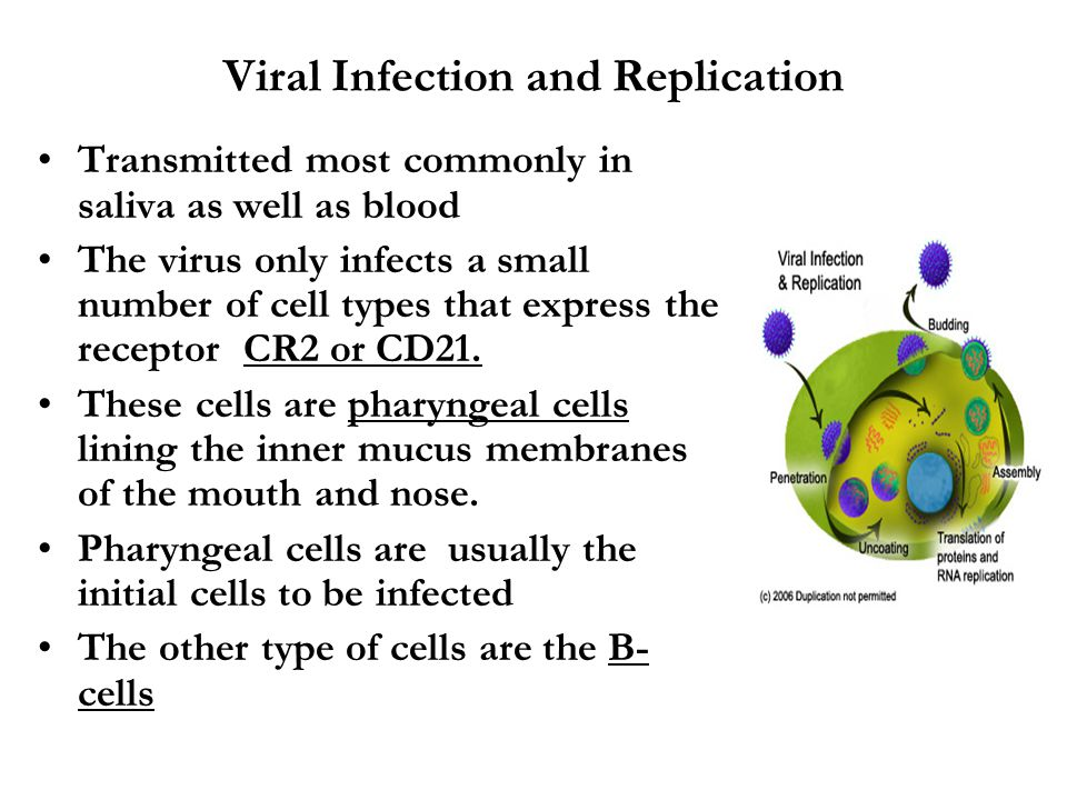 Viral Infection and Replication Transmitted most commonly in saliva as well as blood The virus only infects a small number of cell types that express the receptor CR2 or CD21.