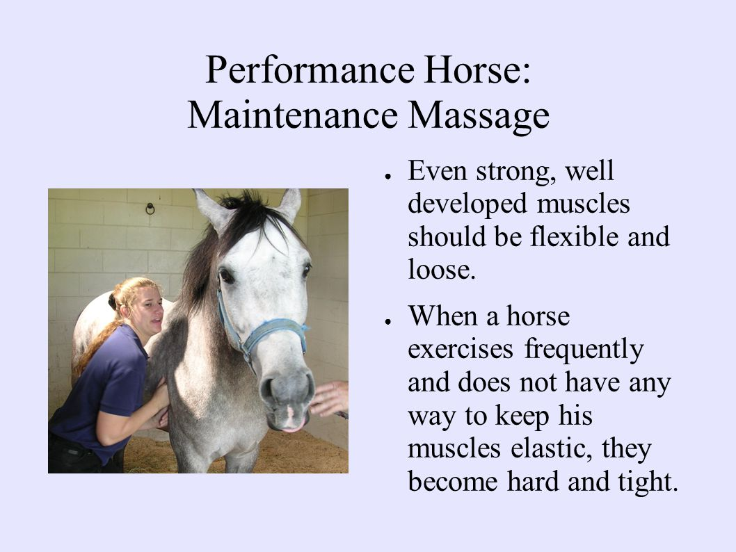 Performance Horse: Maintenance Massage ● Even strong, well developed muscles should be flexible and loose.