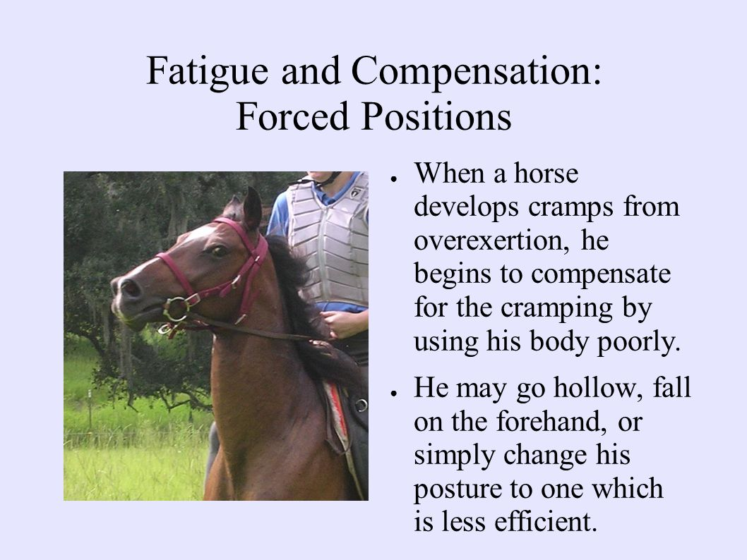 Fatigue and Compensation: Forced Positions ● When a horse develops cramps from overexertion, he begins to compensate for the cramping by using his body poorly.