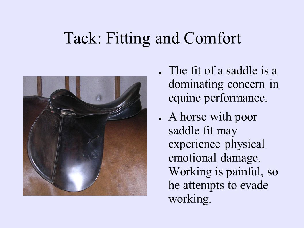 Tack: Fitting and Comfort ● The fit of a saddle is a dominating concern in equine performance.