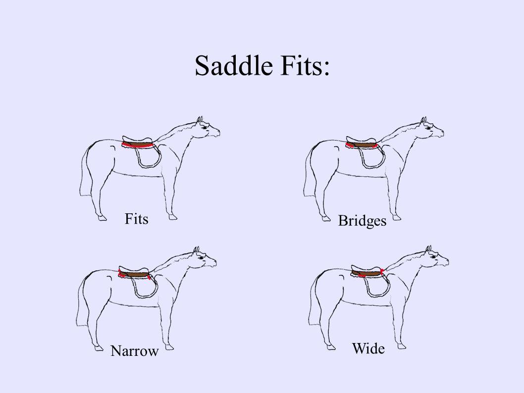Saddle Fits: Fits Bridges Narrow Wide