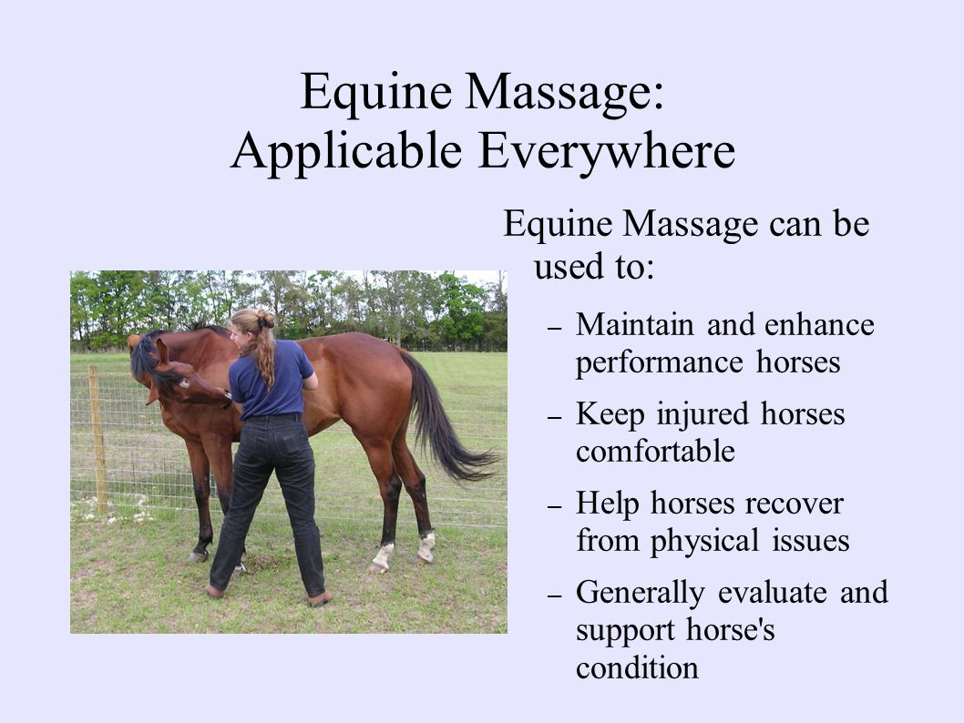 Equine Massage: Applicable Everywhere Equine Massage can be used to: – Maintain and enhance performance horses – Keep injured horses comfortable – Help horses recover from physical issues – Generally evaluate and support horse s condition