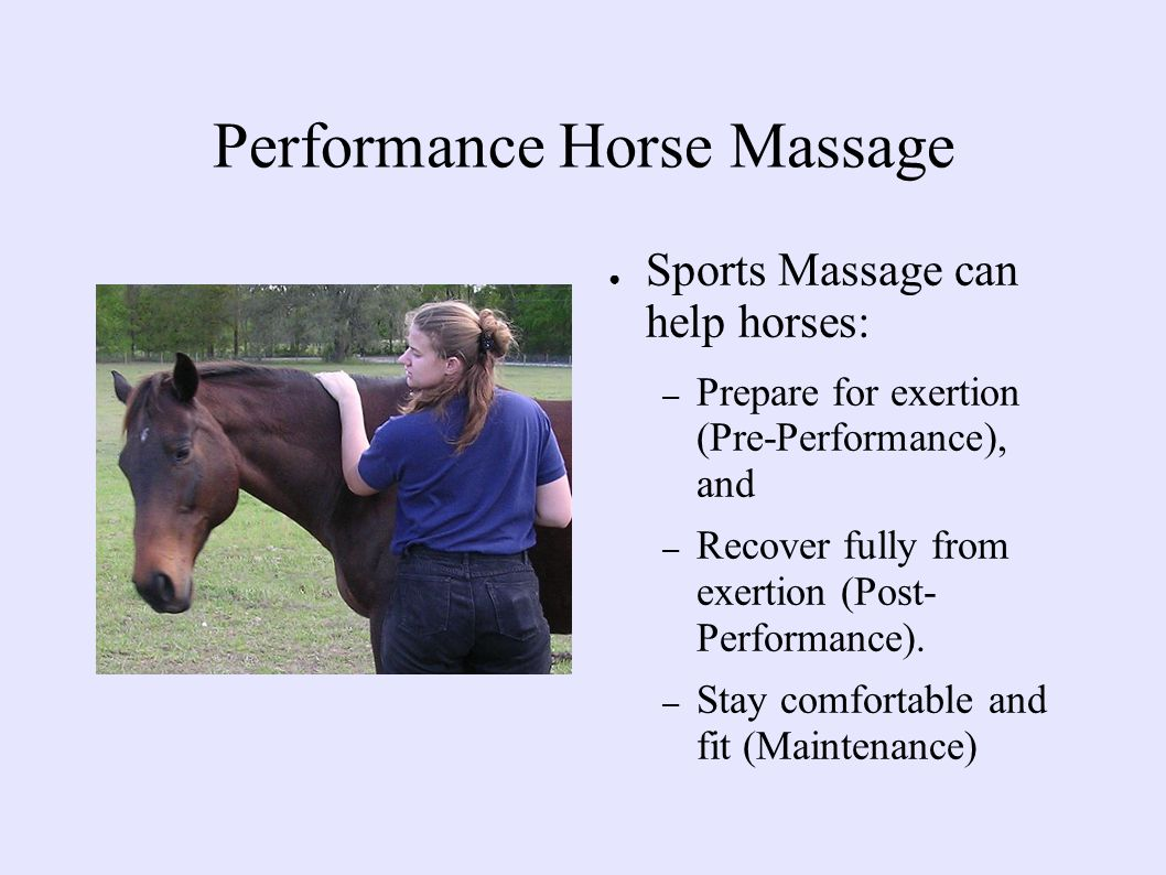 Performance Horse Massage ● Sports Massage can help horses: – Prepare for exertion (Pre-Performance), and – Recover fully from exertion (Post- Performance).