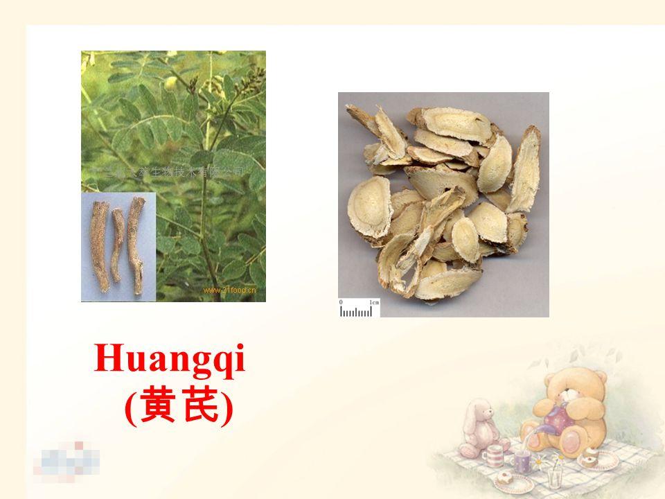 Huangqi ( 黄芪 )