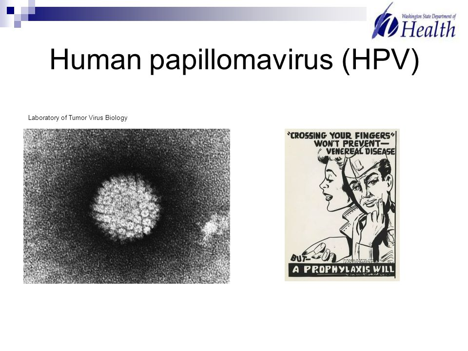 Human papillomavirus (HPV) Laboratory of Tumor Virus Biology