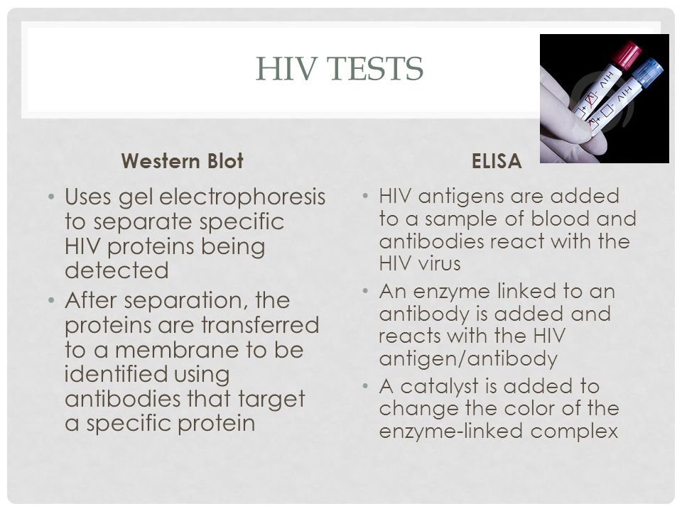 HIV TESTS Western Blot Uses gel electrophoresis to separate specific HIV proteins being detected After separation, the proteins are transferred to a m