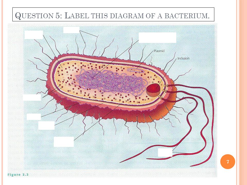 Q UESTION 5: L ABEL THIS DIAGRAM OF A BACTERIUM. 7