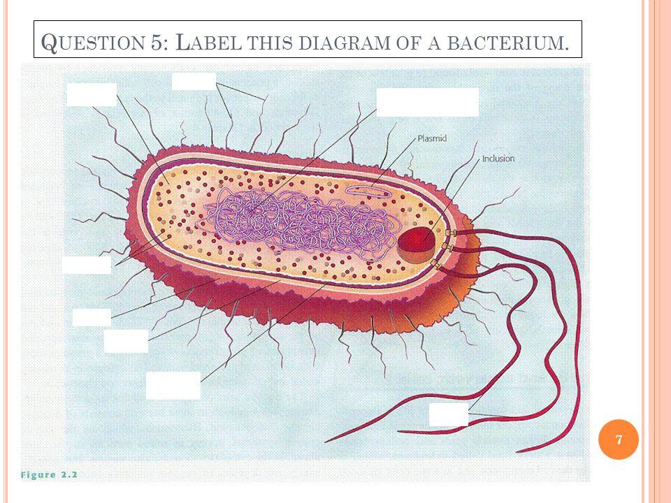 Q UESTION 5: L ABEL THIS DIAGRAM OF A BACTERIUM. 7