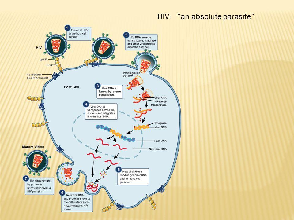 HUMAN PAPILOMA VIRUS (HPV) GENITAL WARTS