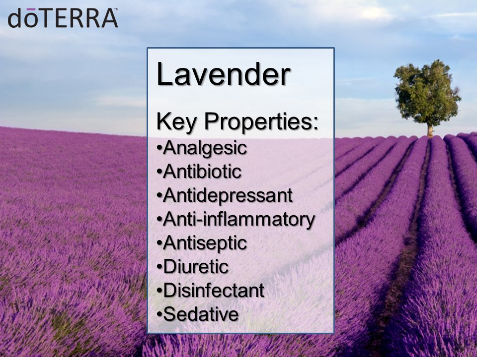 Lavender Key Properties: AnalgesicAnalgesic AntibioticAntibiotic AntidepressantAntidepressant Anti-inflammatoryAnti-inflammatory AntisepticAntiseptic DiureticDiuretic DisinfectantDisinfectant SedativeSedative