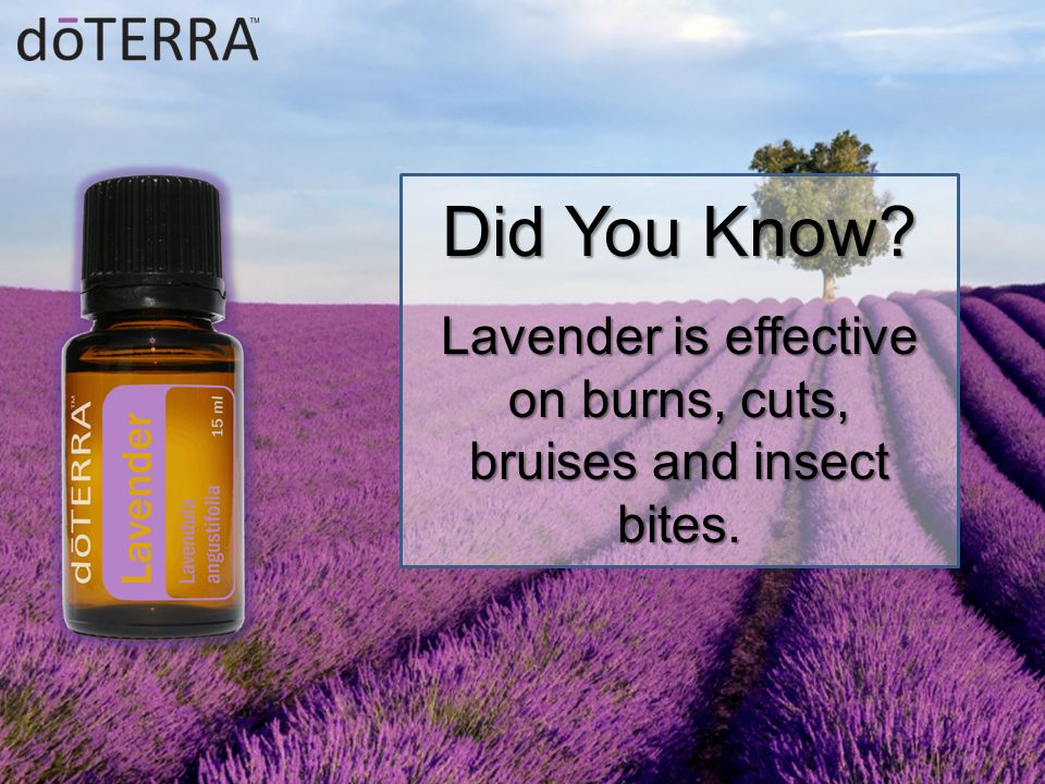 Did You Know? Lavender is effective on burns, cuts, bruises and insect bites.