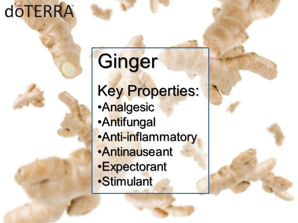 Ginger Key Properties: AnalgesicAnalgesic AntifungalAntifungal Anti-inflammatoryAnti-inflammatory AntinauseantAntinauseant ExpectorantExpectorant StimulantStimulant