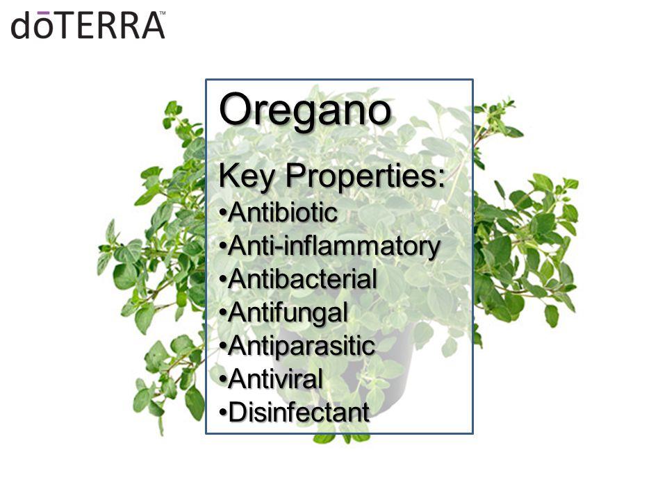 Oregano Key Properties: AntibioticAntibiotic Anti-inflammatoryAnti-inflammatory AntibacterialAntibacterial AntifungalAntifungal AntiparasiticAntiparasitic AntiviralAntiviral DisinfectantDisinfectant