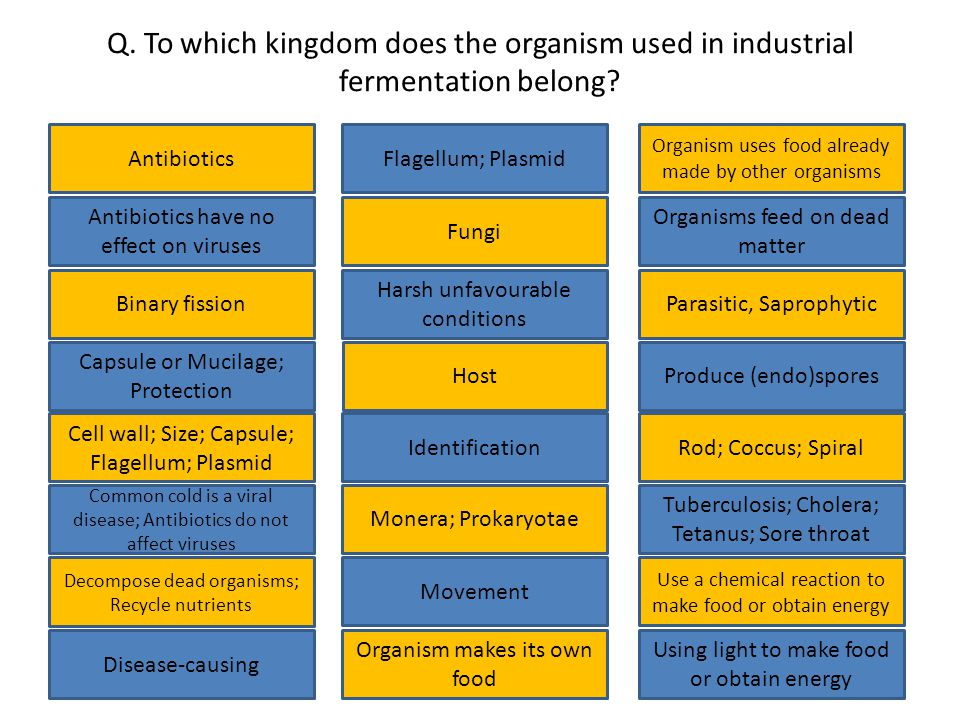 Q. To which kingdom does the organism used in industrial fermentation belong.