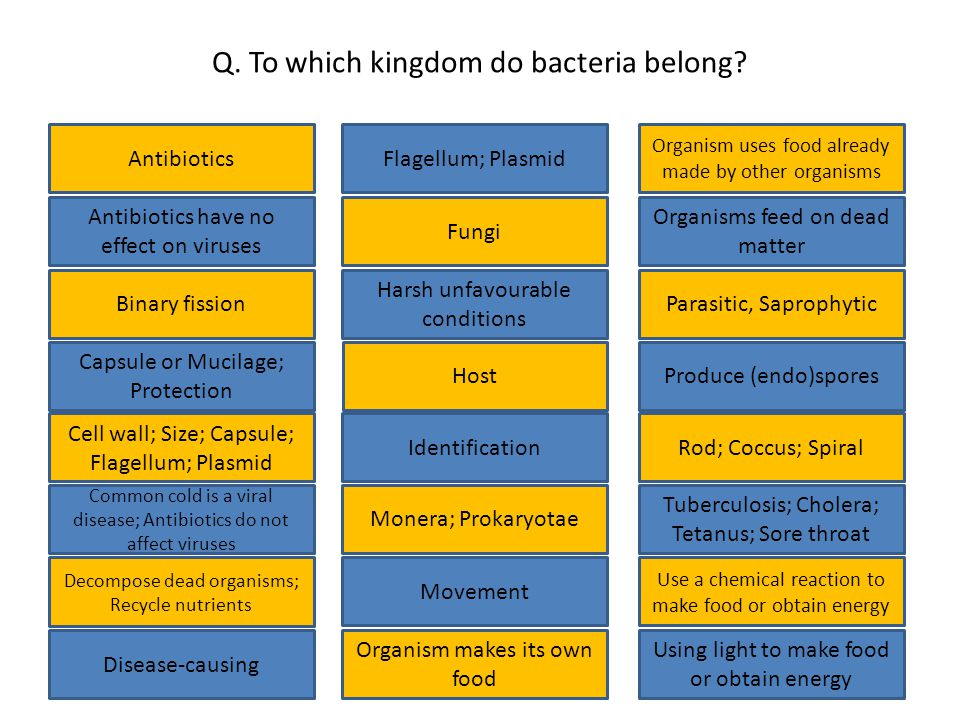 Q. To which kingdom do bacteria belong.