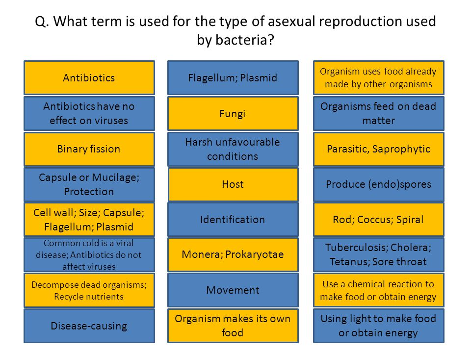 Q. What term is used for the type of asexual reproduction used by bacteria.