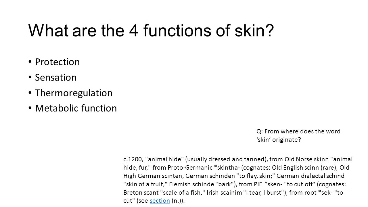 What are the 4 functions of skin? Protection Sensation Thermoregulation Metabolic function Q: From where does the word 'skin' originate? c.1200,