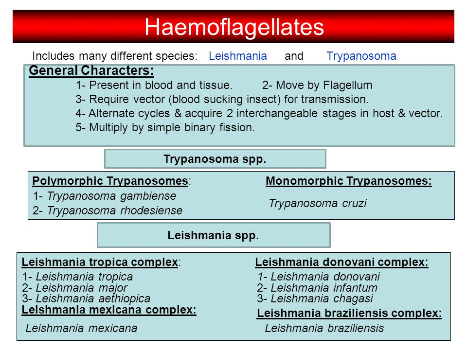 Includes many different species: LeishmaniaTrypanosoma General Characters: 1- Present in blood and tissue.2- Move by Flagellum 3- Require vector (bloo
