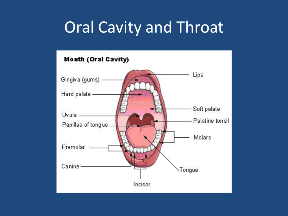 Oral Cavity and Throat