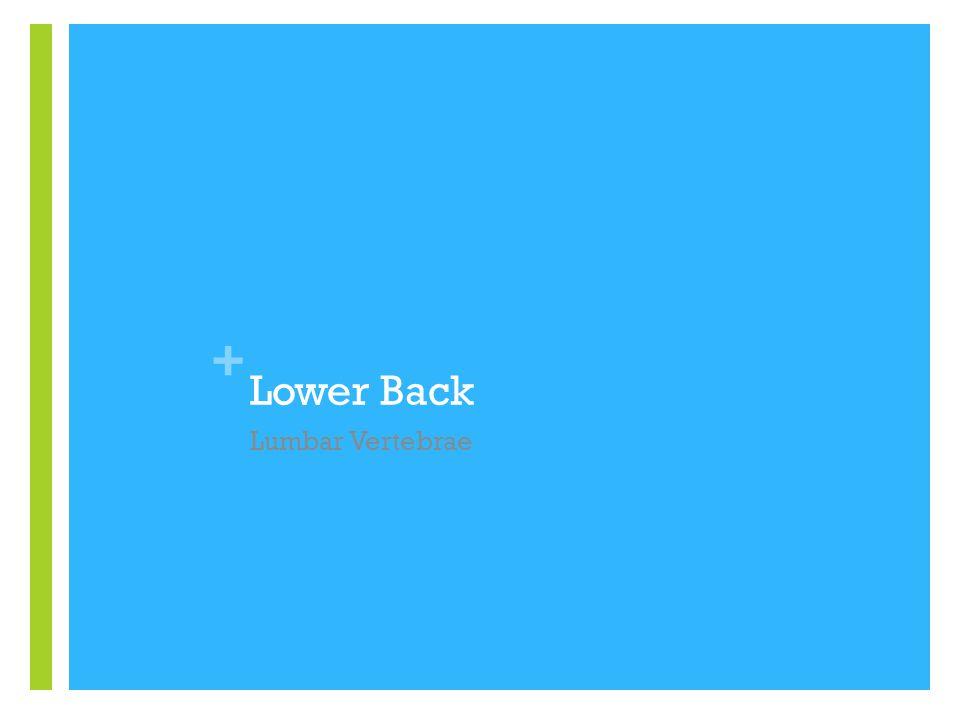 + Lower Back Lumbar Vertebrae