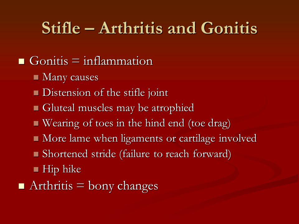 Stifle – Arthritis and Gonitis Gonitis = inflammation Gonitis = inflammation Many causes Many causes Distension of the stifle joint Distension of the