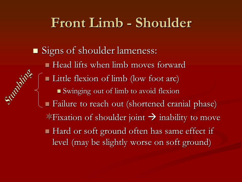 Front Limb - Shoulder Signs of shoulder lameness: Signs of shoulder lameness: Head lifts when limb moves forward Head lifts when limb moves forward Li