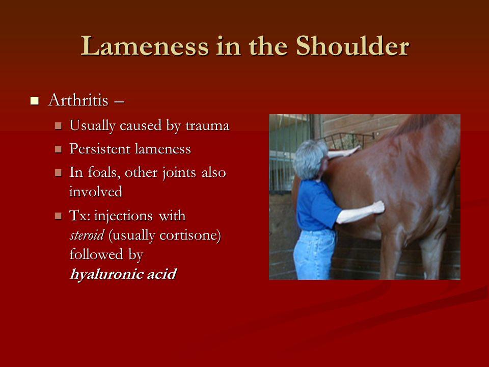 Lameness in the Shoulder Arthritis – Arthritis – Usually caused by trauma Usually caused by trauma Persistent lameness Persistent lameness In foals, o
