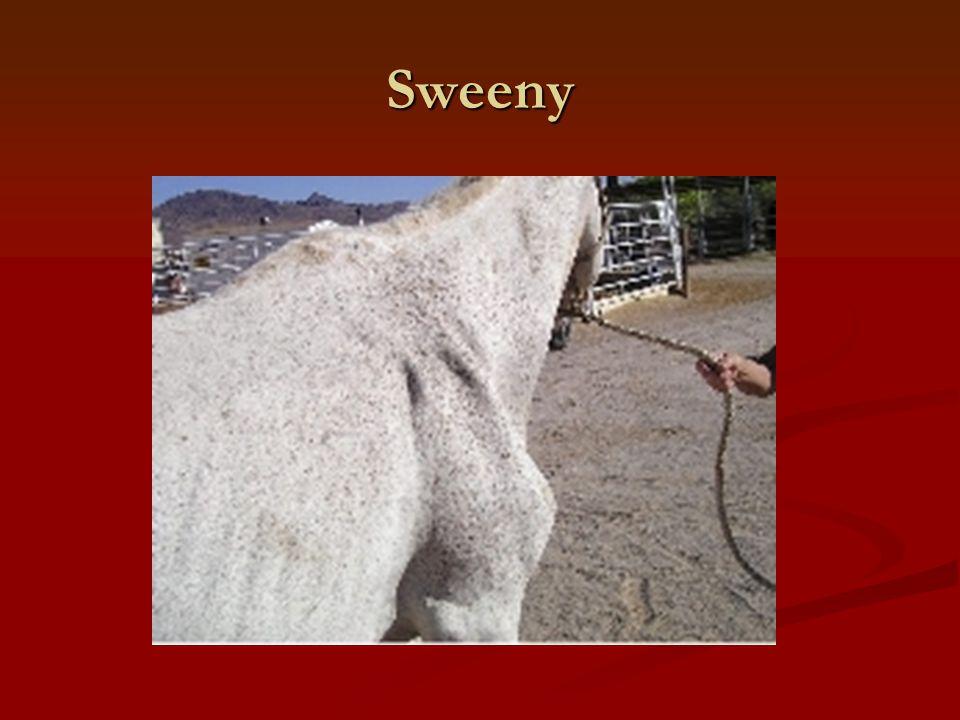 Sweeny