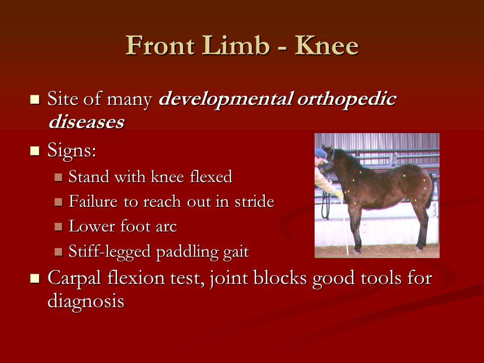 Front Limb - Knee Site of many developmental orthopedic diseases Site of many developmental orthopedic diseases Signs: Signs: Stand with knee flexed S