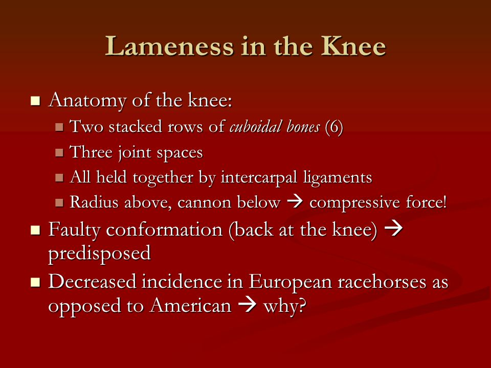 Lameness in the Knee Anatomy of the knee: Anatomy of the knee: Two stacked rows of cuboidal bones (6) Two stacked rows of cuboidal bones (6) Three joi