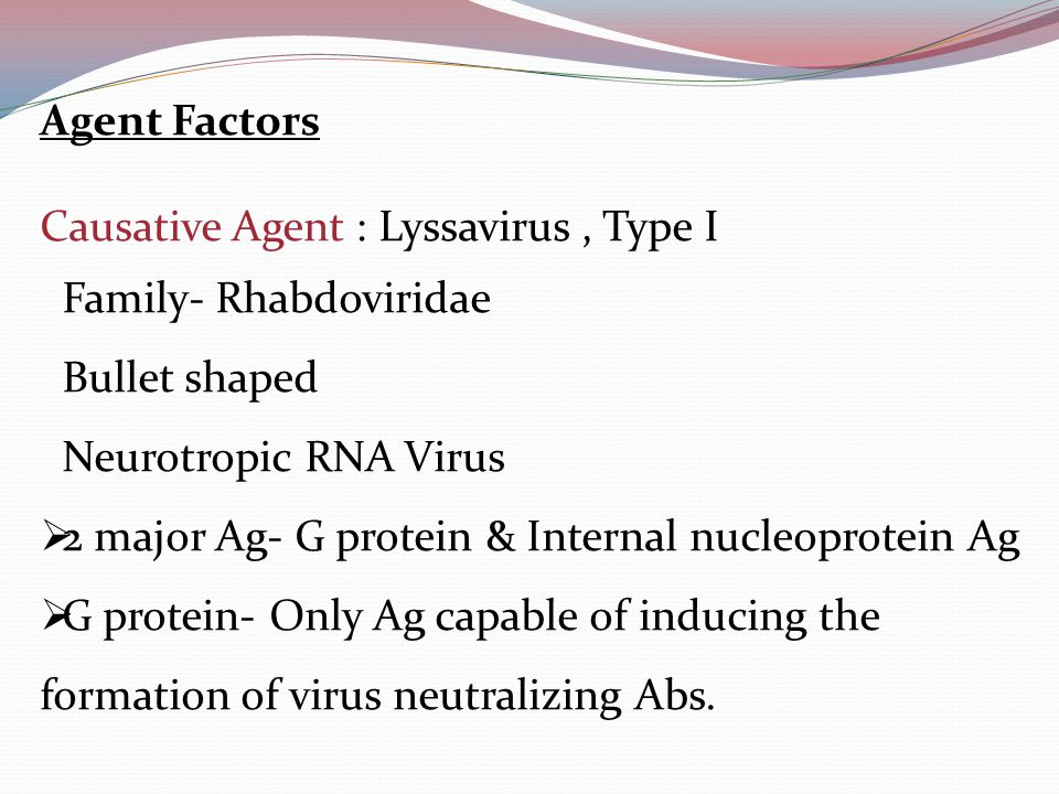 Agent Factors Causative Agent : Lyssavirus, Type I Family- Rhabdoviridae Bullet shaped Neurotropic RNA Virus  2 major Ag- G protein & Internal nucleoprotein Ag  G protein- Only Ag capable of inducing the formation of virus neutralizing Abs.