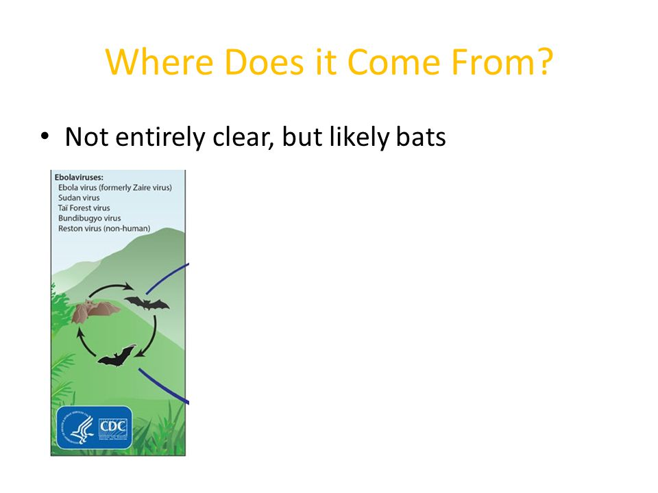 Where Does it Come From? Bats may infect other animals