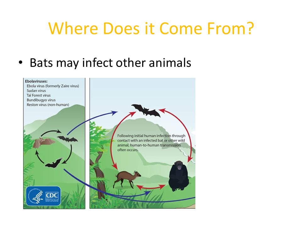 Where Does it Come From Bats may infect other animals
