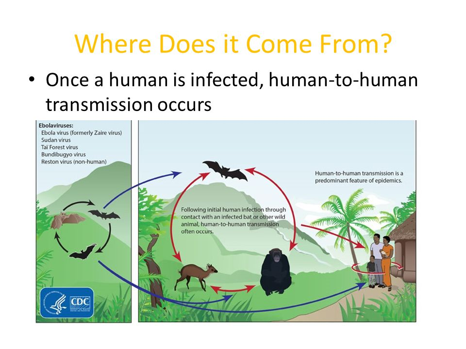 Human to Human Transmission Ebola is transmitted through – Touching body fluids of a person who is sick with or has died from Ebola, – Touching or using objects contaminated with Ebola