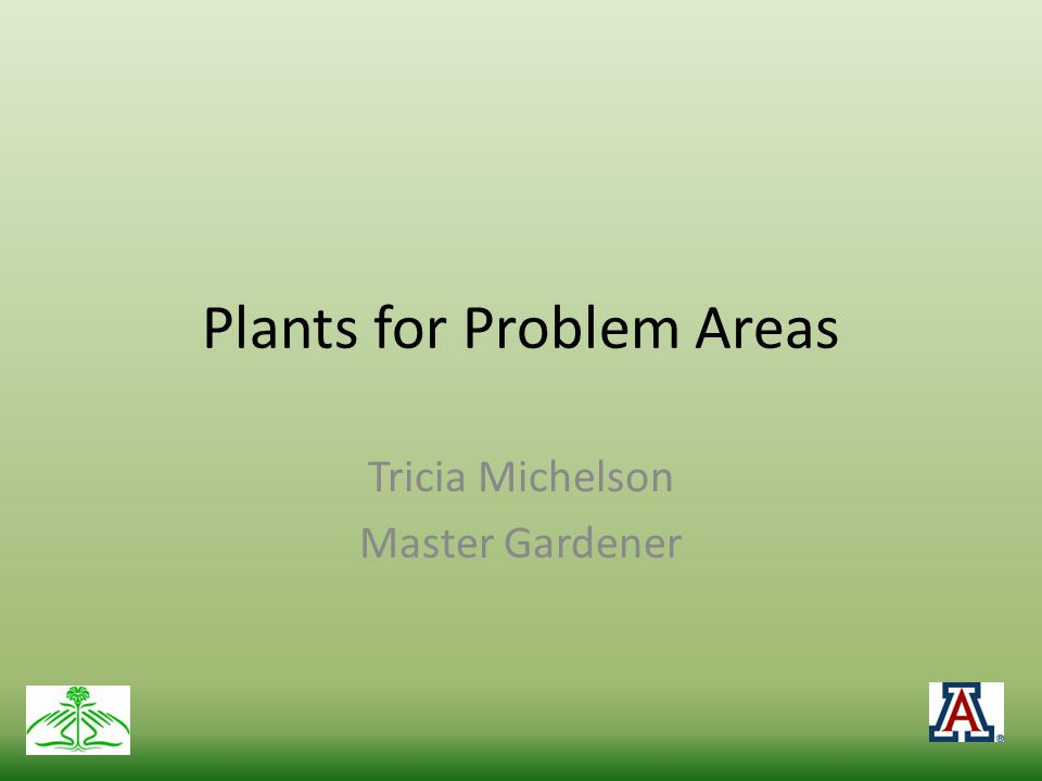Types of Problem Areas Shady Low water Overly wet Sloping or areas where ground erodes