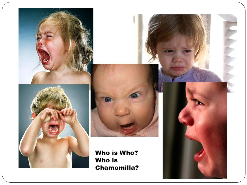 Who is Who Who is Chamomilla
