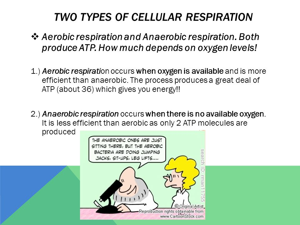 TWO TYPES OF CELLULAR RESPIRATION  Aerobic respiration and Anaerobic respiration.