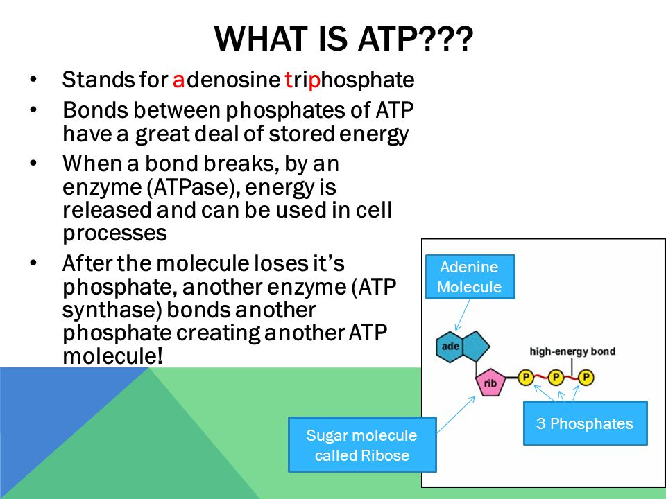 WHAT IS ATP .