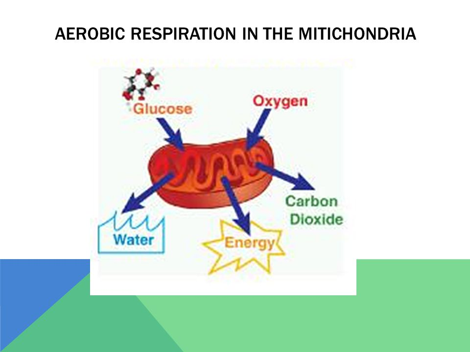 AEROBIC RESPIRATION IN THE MITICHONDRIA